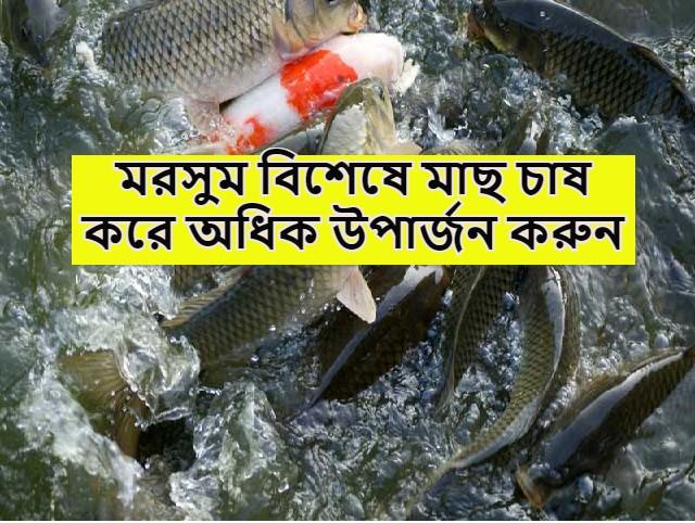 (Season based fish cultivation) এই মরসুমে কোন জাতের মাছ চাষ করলে চাষির অতিরিক্ত উপার্জন হবে? জেনে নিন চাষে অধিক আয়ের উপায়