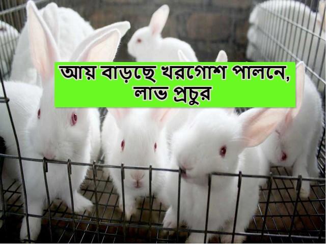 (Commercial rabbit rearing) বাণিজ্যিক খরগোশ পালন কম খরচের সুবিধাজনক উদ্যোগ, আয় অতিরিক্ত
