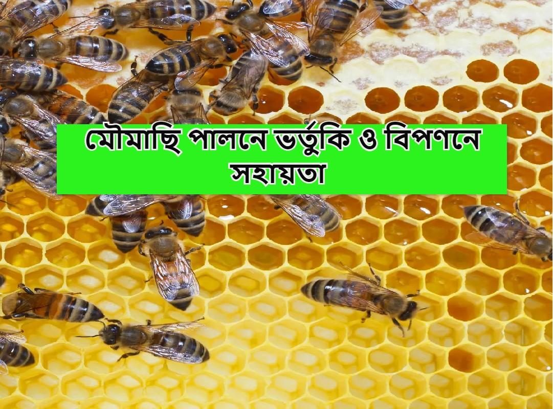 (Subsidies & markets for beekeepers) মৌমাছি পালনকারী এবং যারা মৌ পালন ব্যবসায় যুক্ত হতে চান, তাদের জন্য সহায়তা, ভর্তুকি সংক্রান্ত সমস্ত জানুন