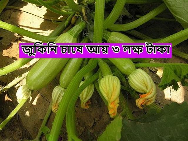(Unconventional vegetable zucchini) অপ্রচলিত সবজী জুকিনি-র চাষে লাভ ৩ লক্ষ পর্যন্ত টাকা