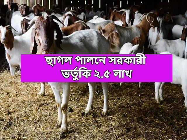 (Get 2.5 lakh government subsidy in goat rearing) ছাগল পালন করলে এখন সরকার থেকে আপনি পেতে পারেন ২.৫ লক্ষ পর্যন্ত সরকারী অনুদান
