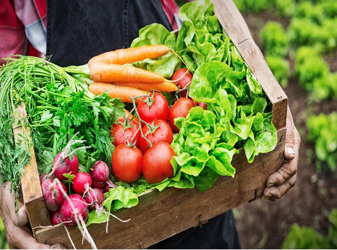 Sufal Bangla - Market for farmers