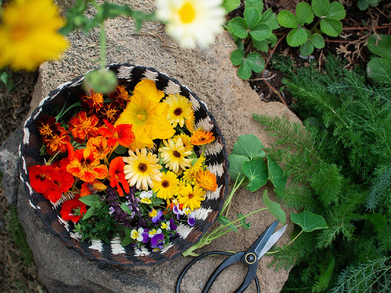 Edible Flower (Image credit - Google)