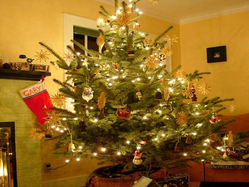 Christmas tree (Image Credit - Google)