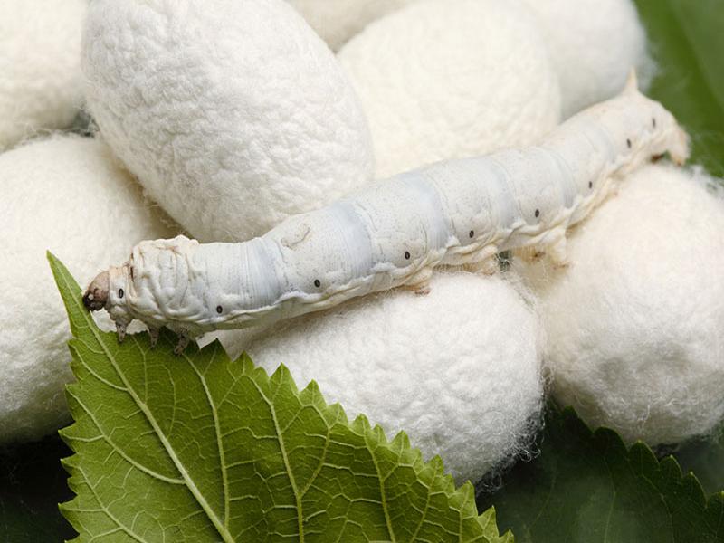 Cocoon (Image Credit - Google)