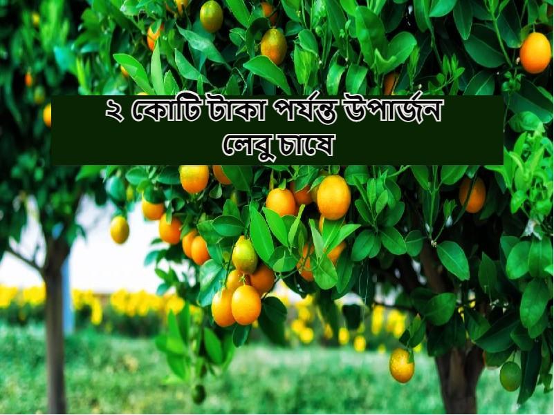 পাতিলেবু চাষ করে সফল কৃষক কিশোর সিংহ, এর চাষে বছরে উপার্জন করুন ২ কোটি পর্যন্ত টাকা (Earn 2 Cr From Lemon Cultivation)