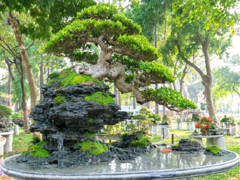 Bonsai (Image Credit - Google)