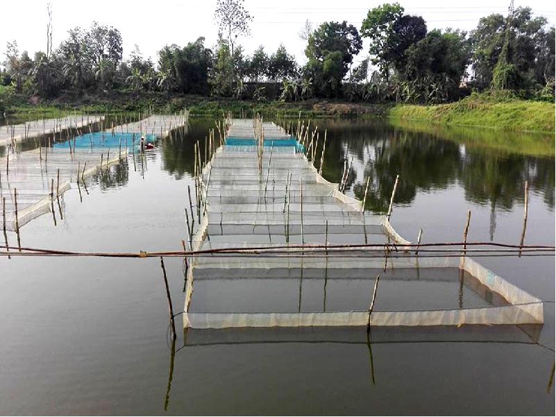 Profitable fish farming (Image Credit - Google)