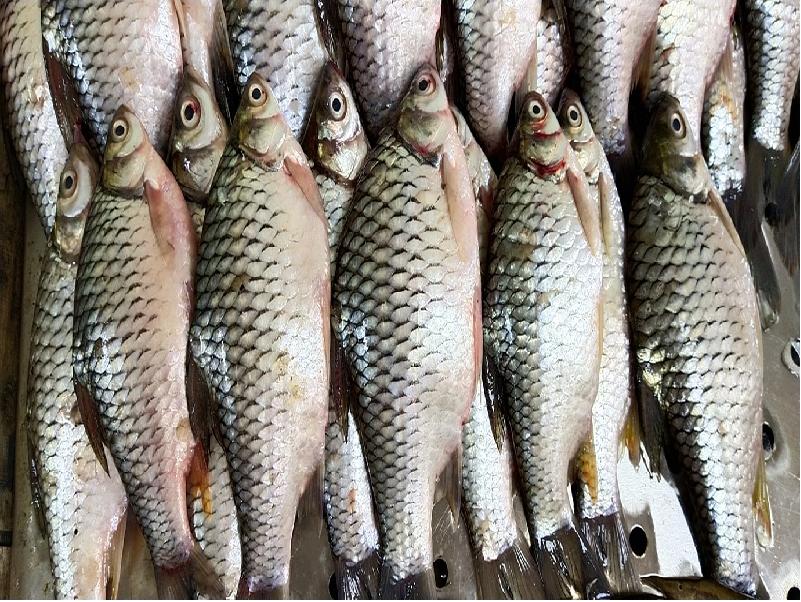 সুস্বাদু মাছ হিসেবে বাজারে বাড়ছে সরপুঁটি মাছের চাহিদা, বাড়ছে মাছ চাষিদের আয় (Sarputi Fish Farming)
