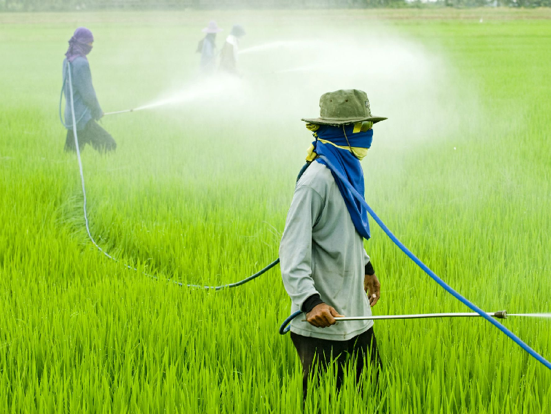 Organic & Chemical Pesticides (Image Credit - Google)