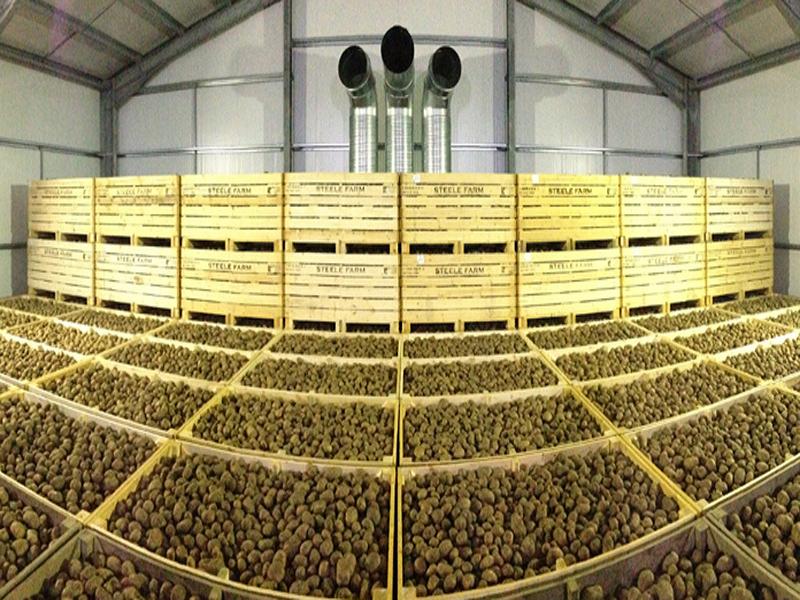 আলু সংরক্ষণের জন্য বাড়িতে হিমঘর তৈরি করে নজির করলেন পশ্চিমবঙ্গের এই কৃষক (Homemade Cold Storage)