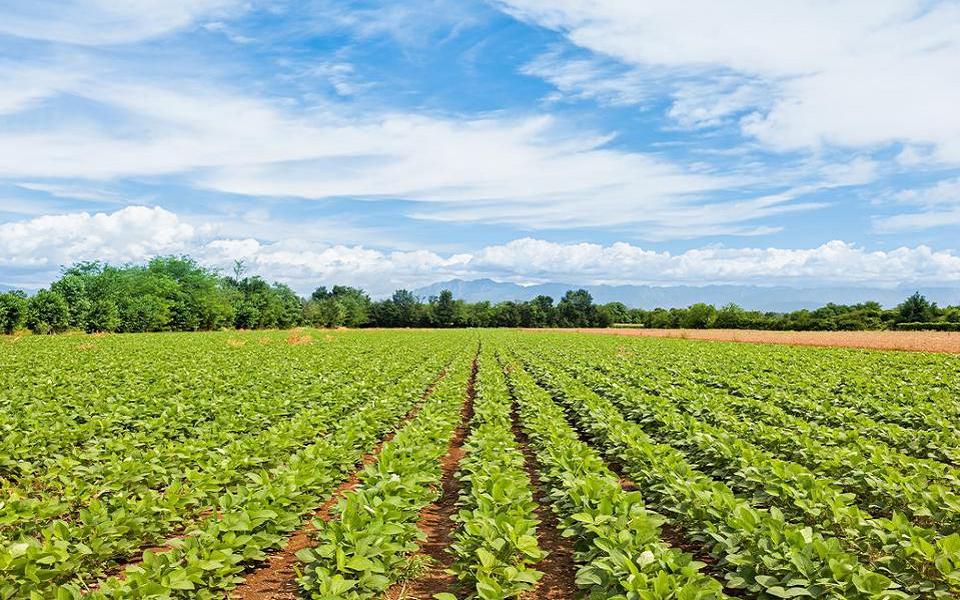 Agricultural Land (Image Credit - Google)