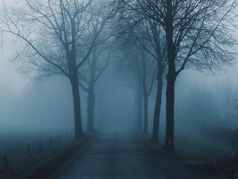 ঘন কুয়াশা, বাড়ছে শৈত্যপ্রবাহ, সপ্তাহান্তে জাঁকিয়ে শীত দুই বঙ্গে (Weather Forecast- Dense Fog, Increasing Cold Wave)