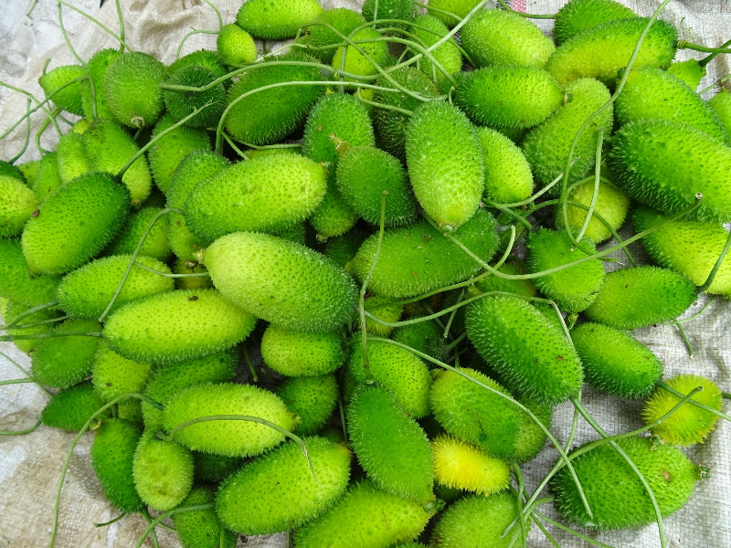 Spiny Gourd (Image Source - Google)