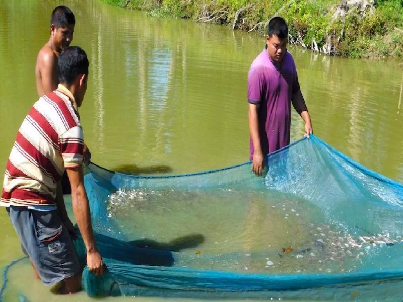 Fish Farmers (Image Credit - Google)