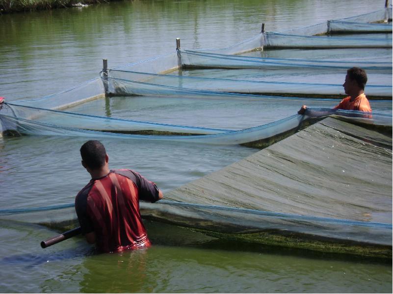 Fish Farming (Image Credit - Google)