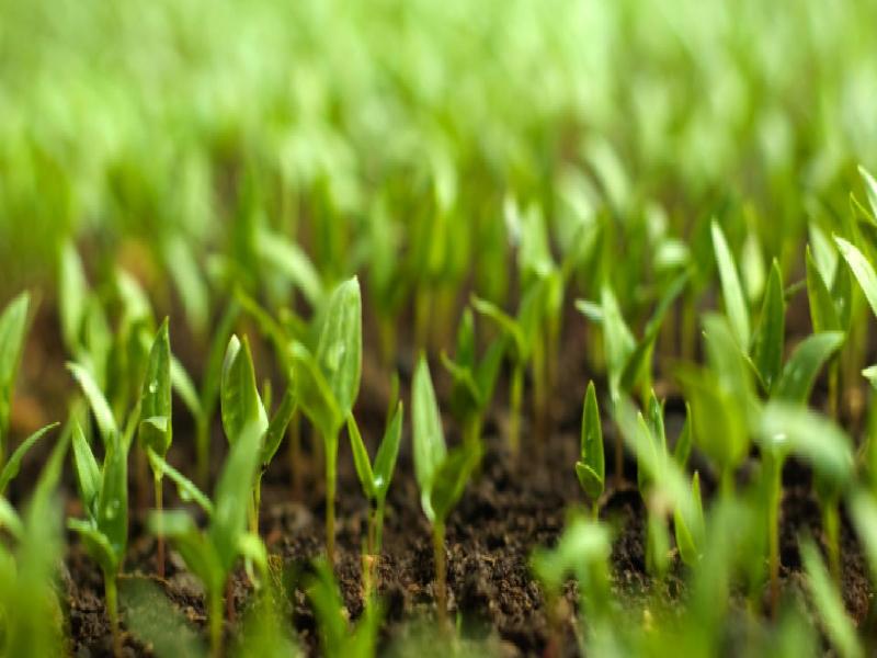 জমিতে কেন ব্যবহার করবেন জৈব সার? কৃষকের লাভই বা হবে কতটা? জৈব সারের ব্যবহারে উপার্জন হবে দ্বিগুণ (Profitable Farming – Use Organic fertilizer)