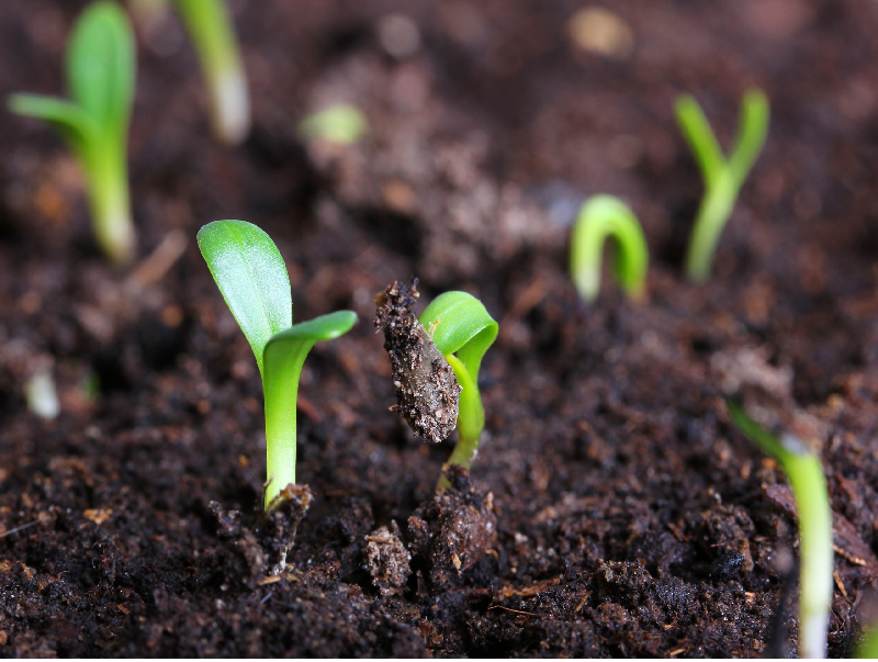 Organic fertilizer (Image Source - Google)