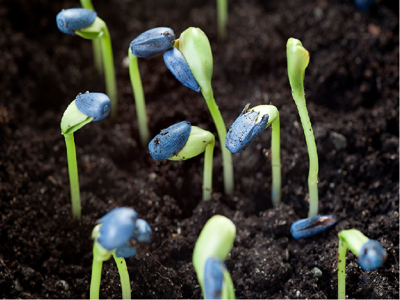 Seed Purification (Image Source - Google)