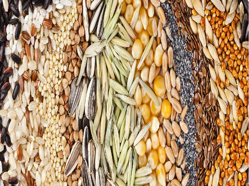 ফসল চাষে ক্ষতির হাত থেকে বাঁচতে একান্ত জরুরী বীজ শোধন ও সংশিত বীজ (Seed Purification)