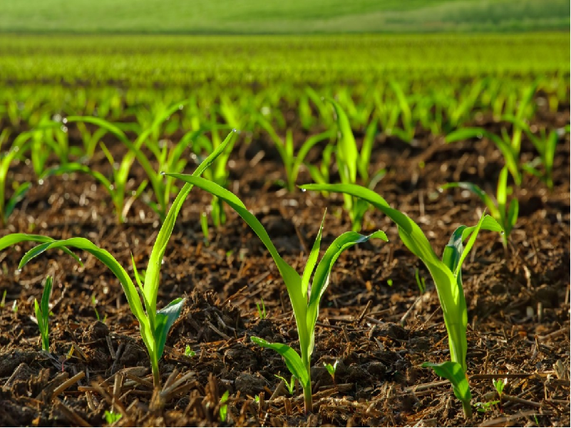 অধিক ও উন্নতমানের ফসলের ফলনের জন্য মাটিতে অম্লত্ব ও ক্ষারত্বের সমতা বজায় রাখুন এই পদ্ধতিতে (Process To Higher & Better Crop Yield)