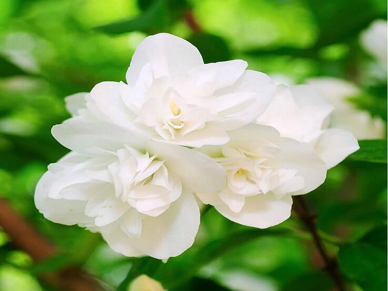 Bel Flower