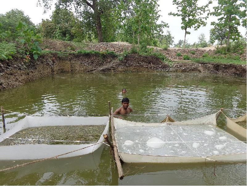 Fish Farmer (Image Credit - Google)