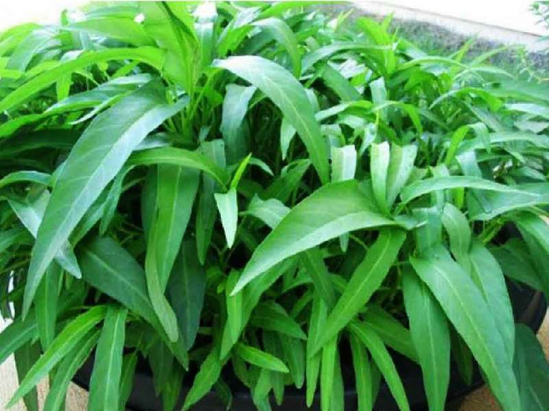 Water Spinach (Image Credit - Google)