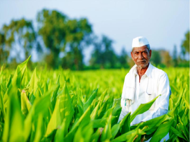 PM KISAN In West Bengal (Image Credit - Google)