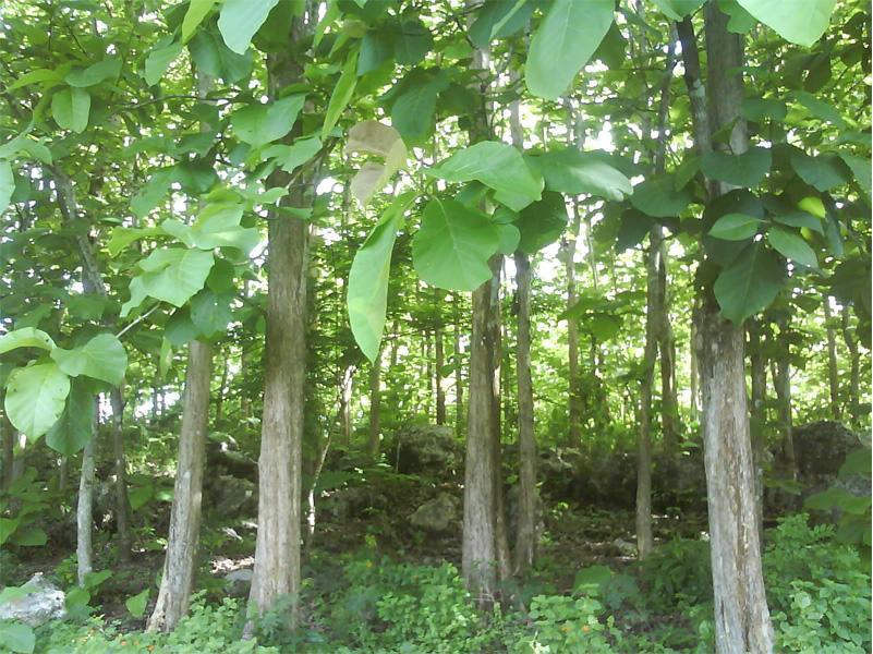 Tree Farming Business (Image Credit - Google)