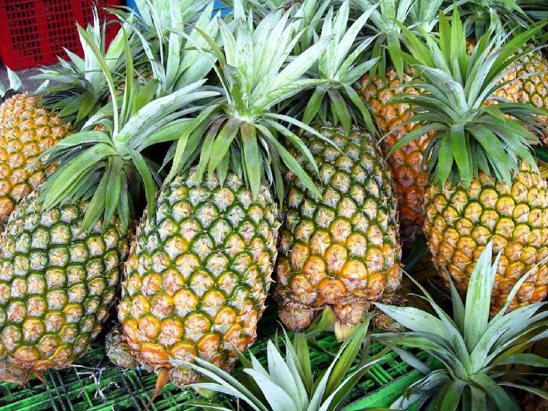 Pineapple (Image Credit - Google)