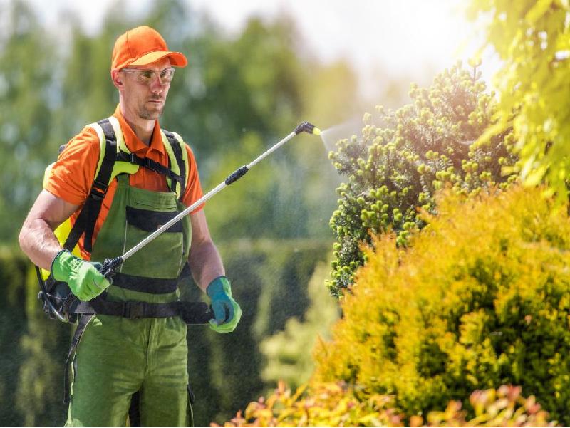 উচ্চতর বিপজ্জনক কীটনাশক বা এইচটিটিপি কী? কোন কীটনাশক নিষিদ্ধ কৃষিক্ষেত্রে? জানুন বিস্তারিত (Harmful Pesticides)