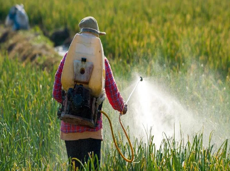 Pesticides Application (Image Credit - Google)