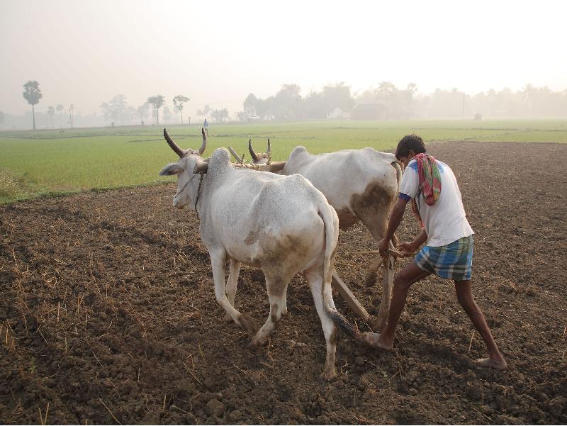 Organic Farming (Image Credit - Google)