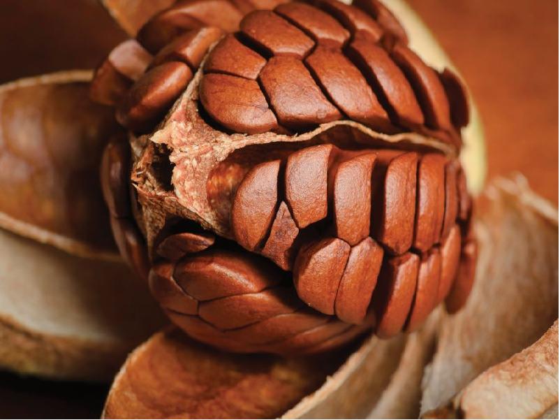 জানুন বিশেষ ঔষধি গুণ সম্পন্ন মেহগনি বীজের উপকারিতা (Benefits Of Mahogany Seeds)