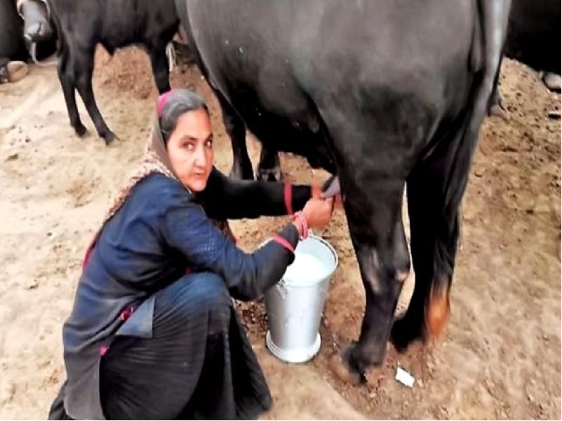 দুগ্ধ ব্যবসার মাধ্যমে এই মহিলা কৃষক উপার্জন করছেন ১ কোটি টাকা, জানুন তার সাফল্যের কাহিনী (Successful Dairy Farmer)