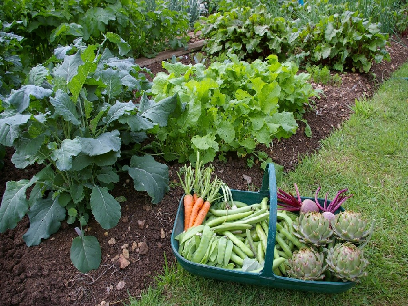 Kitchen Garden (Image Credit - Google)