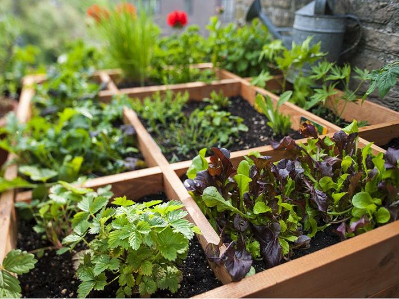 এই মরসুমে আপনার রান্নাঘরেই তৈরি করতে পারেন মনের মতো শাকসবজীর বাগান (Kitchen Garden Idea)