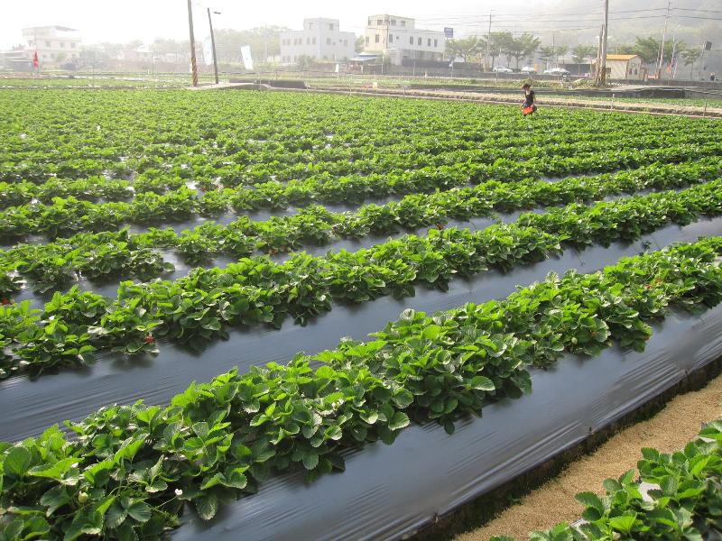 খরা প্রবণ অঞ্চলে আচ্ছাদন ব্যবহার করে কিভাবে করবেন ফসল এর অধিক উৎপাদন (Increased Crop Production By Using PolyMulch) ?