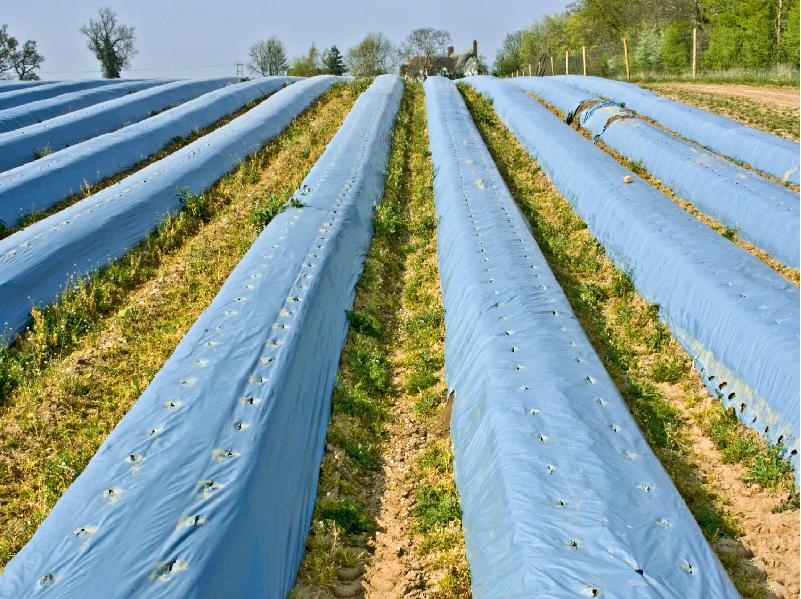 আধুনিক কৃষিতে জৈব আচ্ছাদনের ব্যবহার (Organic Mulching In Modern Agriculture)