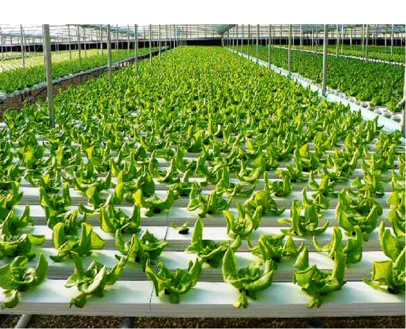 Hydronic Farming (Image Credit - Google)