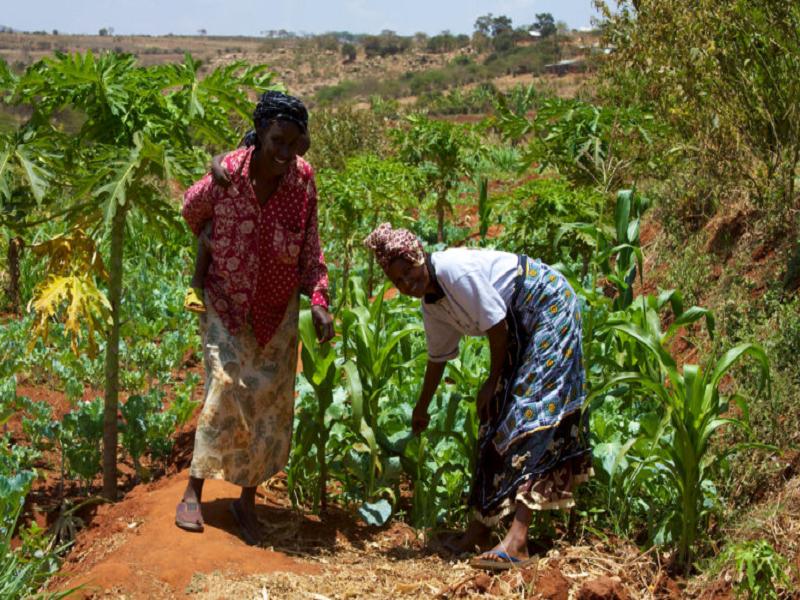 Farmers (Image Credit - Google)