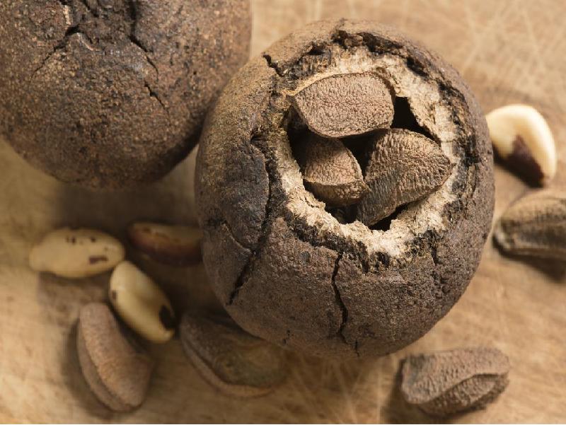 Brazilian Nuts (Image Credit - Google)