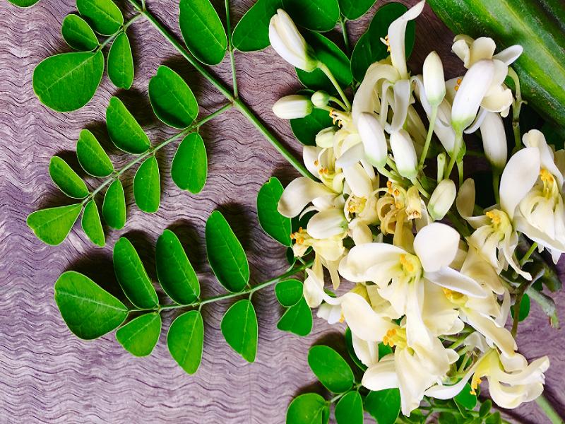 Moringa Flower (Image Credit - Google)