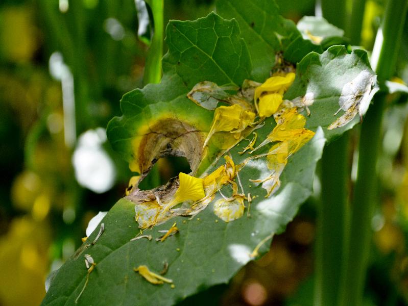 Pest & Disease Management System (Image Credit - Google)