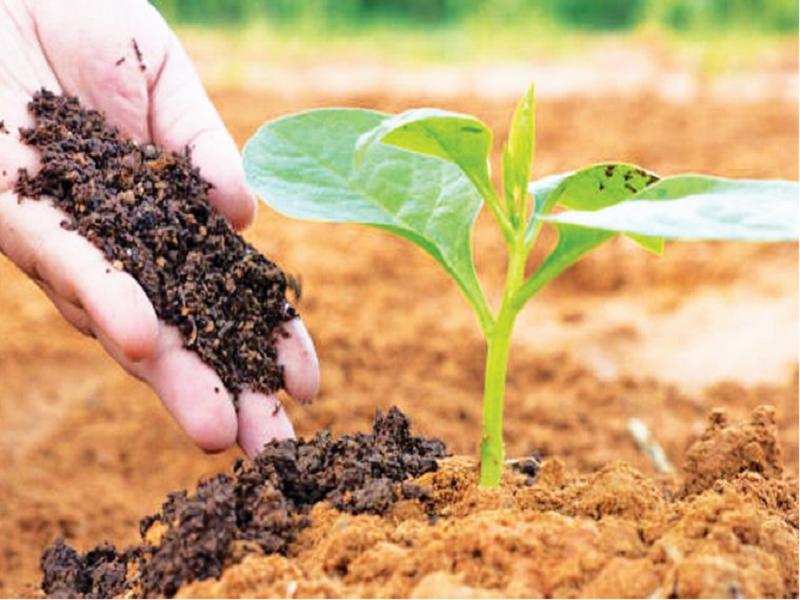 Profitable farming (Image Credit - Google)