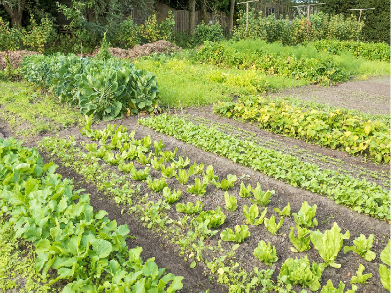 Crop Rotation (Image Credit - Google)