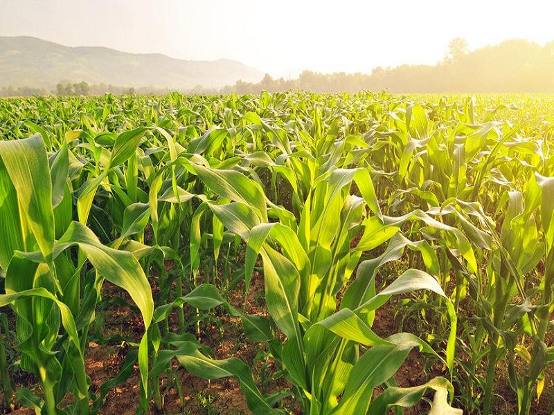 Crop Cultivation (Image Credit - Google)