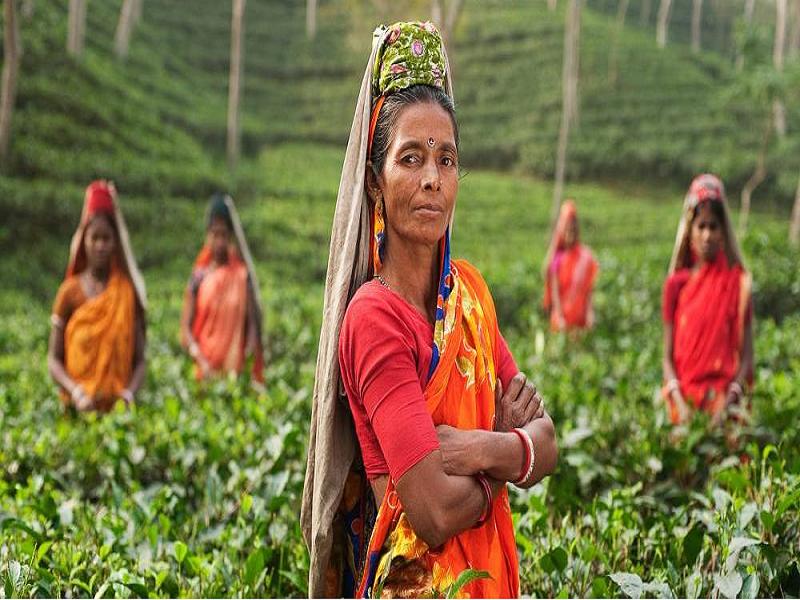 নারী কৃষির অগ্রদূত, ভারতের কৃষিতে মেরুদন্ডই নারী
