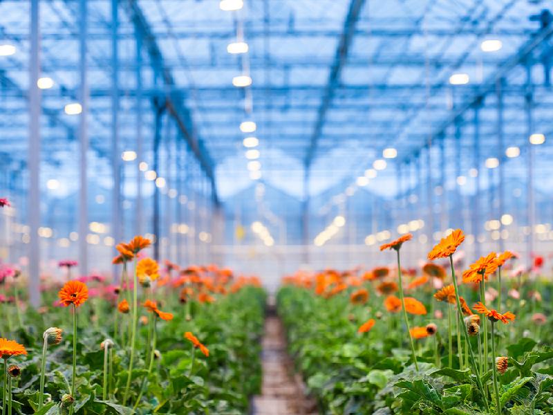 Poly House Farming (Image Credit - Google)